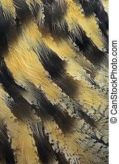Eurasian Eagle Owl feathers - Closeup Eurasian Eagle Owl ...