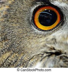 Eurasian Eagle Owl - Closeup eye of Eurasian Eagle Owl