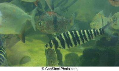 closeup, fish, aquarium