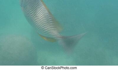 closeup fish diving under sea activ