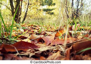 closeup., folhas, outono, park-