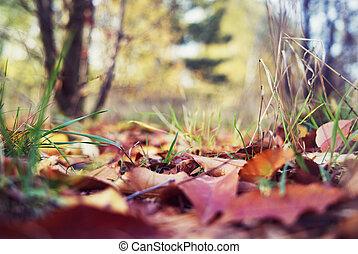 closeup., folhas, park-, outono