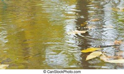 closeup footage rain on water surface