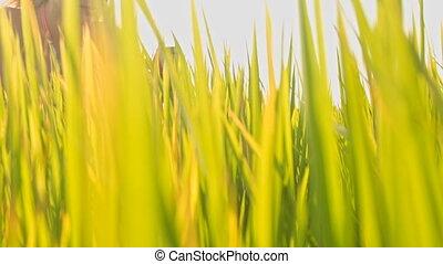Closeup Girl in Wreath Through Rice Stems against Sky