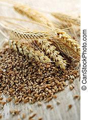 closeup, grain, blé, entier, noyaux