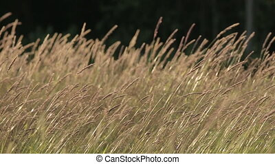 Closeup Grass Field Sun Wind