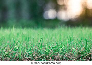 green grass s blurred background bokeh