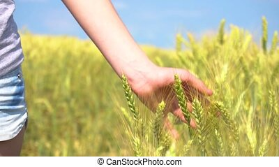 Closeup hand touching cereal grass - Closeup hand of...