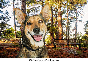 Closeup Happy Dog in the Woods