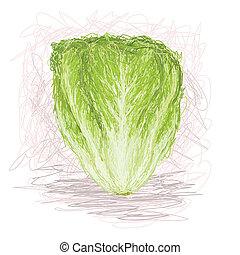 lettuce - closeup illustration of a fresh lettuce vegetable.