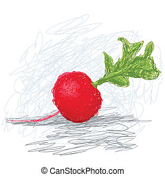 radish - closeup illustration of a fresh radish vegetable.