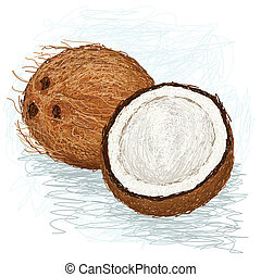 coconut - closeup illustration of a half and whole coconut.