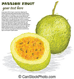 closeup illustration of fresh passion fruit isolated in white background.