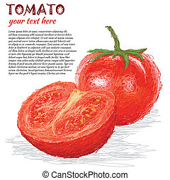 tomato fruit - closeup illustration of fresh tomato fruit,...