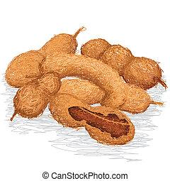 tamarind - closeup illustration of group of ripe tamarind...