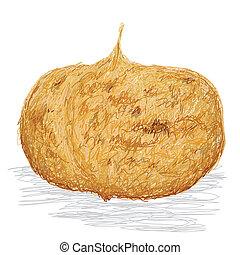 closeup illustration of jicama root isolated if white background.