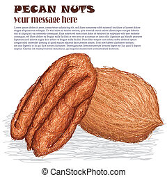 pecan nuts - closeup illustration of pecan nuts isolated in ...