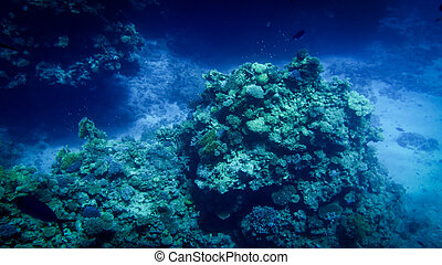 Closeup image of colorful coral reef in the Red sea. Growing anemones, sea weeds and swimming colorful fishes