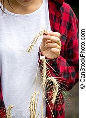 Closeup image of female farmer holding ripe wheat in hand