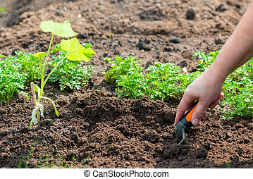 Closeup image of woman with spade digging soil in garden.