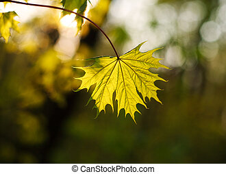 Closeup leaf growing in forest in light of setting sun