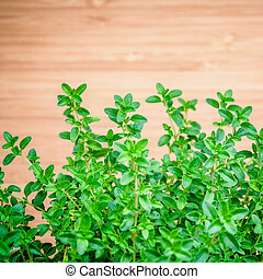 Closeup lemon thyme leaves from the herb garden. Thymus...