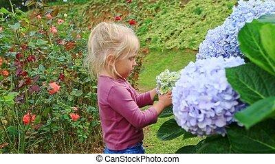 Closeup Little Girl Touches Hydrangea Flower Petals in Park