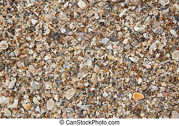 closeup macro high detail of seabeach sand and small sea shell texture pattern background.