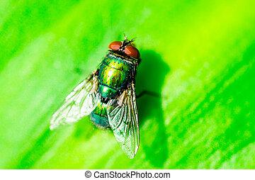 Closeup Macro image of a Green Bottle Fly