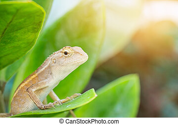 Closeup macro shot of Oriental garden lizard. Selective Focus