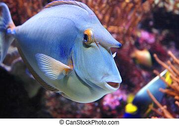 Marine Fish - Closeup - Marine Fish