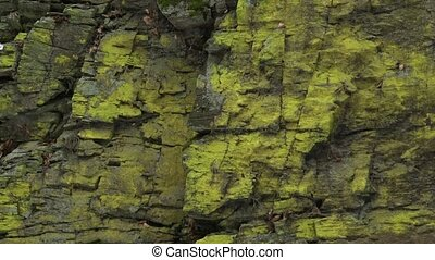 closeup, montagne, (psilolechia, lotissements, grand, surface, lucida)., lichen, vert, rocher, couvert, pierres