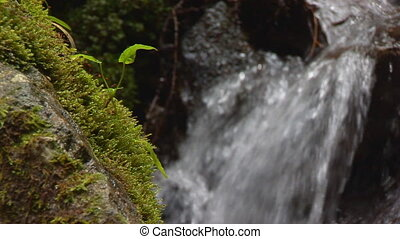 closeup moss with blurred waterfall