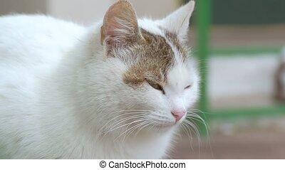 closeup, od, niejaki, kot, przeglądnięcie dokoła, powolny ruch, video