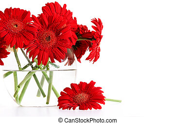 Closeup od red gerber daisies in glass vase