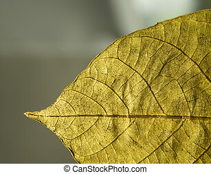 closeup of a autumn leaf in detail
