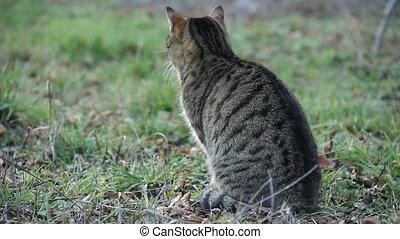 closeup of a beautiful domestic cat in a field
