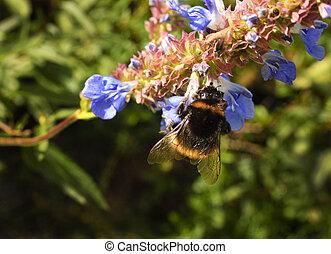 closeup of a bee gathering nectar