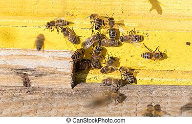 Closeup of a beehive