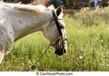 Closeup of a beutiful white horse