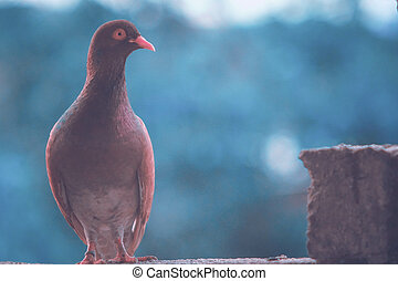 Closeup of a brown pigeon in the park