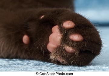 Closeup of a cat foot - Closeup shot of the underside of a...