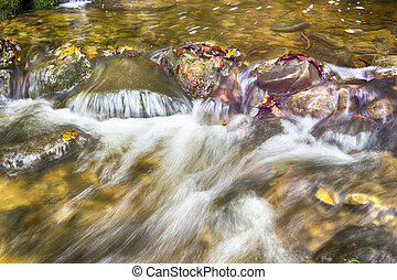 closeup of a creek in forest