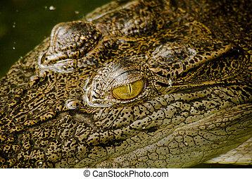 Closeup of a crocodile