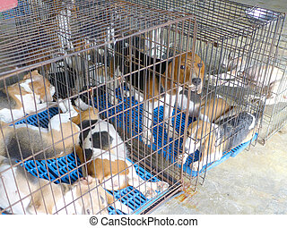 closeup of a dog cage