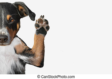 Closeup of a dog's paw raising up with room for text.