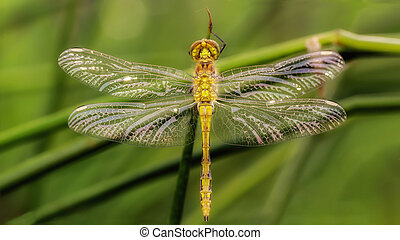 Closeup of a dragonfly in the grass