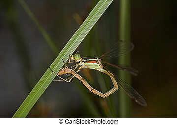 Closeup of a dragonfly