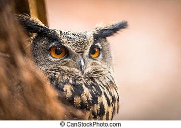 Closeup of a Eurasian Eagle-Owl