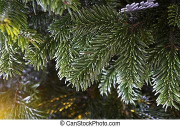 Closeup of a green Christmas tree